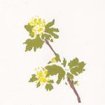Botanical Screen-Printing